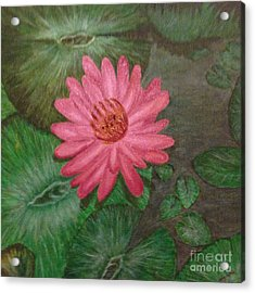 Water Lilly Acrylic Print by S P