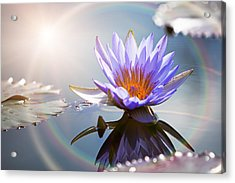 Lotus Flower With Sun Flare Acrylic Print