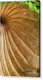 Acrylic Print featuring the photograph Lotus Leaf by Jane Ford