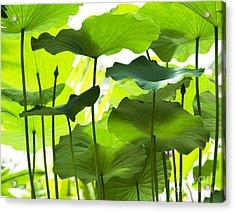 Lotus Leaves Acrylic Print