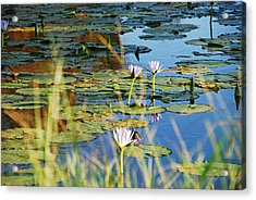 Acrylic Print featuring the photograph Lotus-lily Pond 2 by Ankya Klay