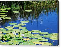 Acrylic Print featuring the photograph Lotus-lily Pond by Ankya Klay