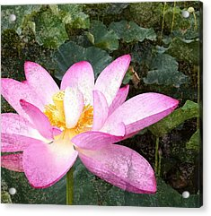 Lotus Acrylic Print by Michael Volpicelli