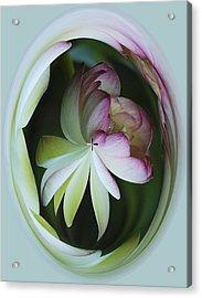 Lotus Mirror Acrylic Print by Jean Noren