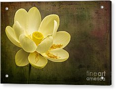 Acrylic Print featuring the photograph Lotus Notes by Vicki DeVico