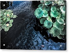 Lotus Pond Fantasia Acrylic Print
