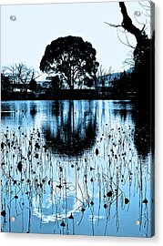 Lotus Pond Winter - 4 Acrylic Print by Larry Knipfing