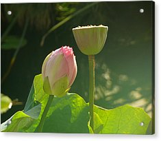 Lotus Soft Acrylic Print by Evelyn Tambour
