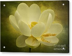 Acrylic Print featuring the photograph Lotus by Vicki DeVico
