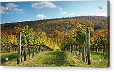 Loudon County Vineyard I Acrylic Print by Steven Ainsworth