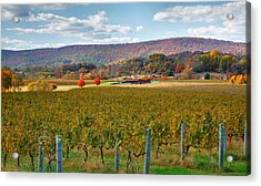 Loudon County Vineyard II Acrylic Print by Steven Ainsworth