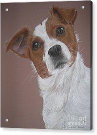 Louis Acrylic Print by Joanne Simpson