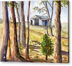 Louisiana Barn Through The Trees Acrylic Print