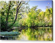 Louisiana Bayou Acrylic Print by Kathleen K Parker