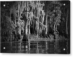 Louisiana Bayou Acrylic Print by Mountain Dreams