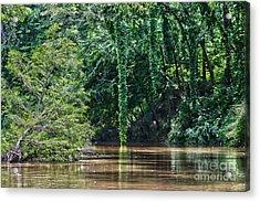 Louisiana Bayou Toro Creek Swamp Acrylic Print by D Wallace