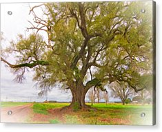 Louisiana Dreamin' Acrylic Print by Steve Harrington