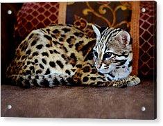 Lounging Leopard Acrylic Print