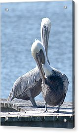 Love At First Site Acrylic Print by Nancy Edwards