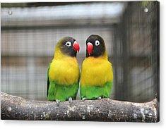 Love Birds Acrylic Print by Kerry Lapcevich