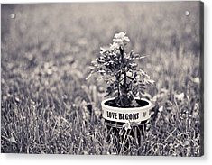 Acrylic Print featuring the photograph Love Blooms by Sara Frank