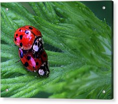 Love Bugs Acrylic Print by JC Findley