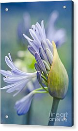Love Flower Acrylic Print