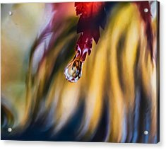 Love Ignites Acrylic Print by Kenneth Haley