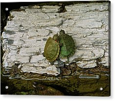 Love In A Shell Acrylic Print