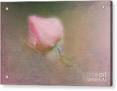 Love In Bloom  Acrylic Print by A New Focus Photography