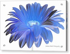 Acrylic Print featuring the digital art Love Is A Gift by Jeannie Rhode
