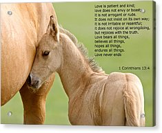 love is gentle love is kind Horse and colt Acrylic Print