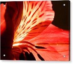 Love Is In Bloom Acrylic Print by Tara Miller