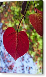 Love Is Everywhere Acrylic Print