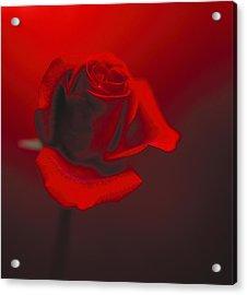 Love Acrylic Print by Lana Enderle