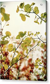 Acrylic Print featuring the photograph Love Leaf by Rebecca Harman