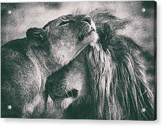 Love Acrylic Print by Mohammed Alnaser