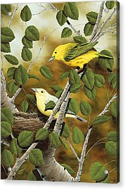 Love Nest Acrylic Print by Rick Bainbridge