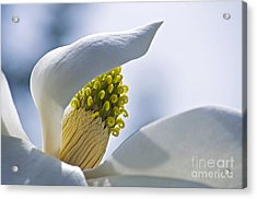 Love Of Nature Acrylic Print by Gwyn Newcombe