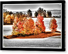 Acrylic Print featuring the photograph Love Of Red by Michaela Preston