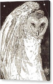 Love Owl Acrylic Print by George Harrison