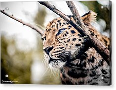 Acrylic Print featuring the photograph Love Panther Iv by Stwayne Keubrick