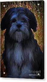 Love Puppies Acrylic Print by Katherine Williams