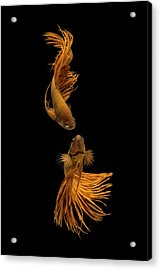 Love Story Of The Golden Fish Acrylic Print