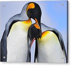 Love Acrylic Print by Tony Beck