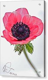 Love You... Acrylic Print by  Andrzej Goszcz