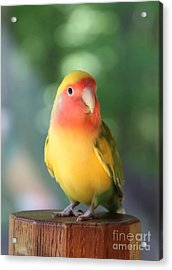 Lovebird On A Pedestal Acrylic Print