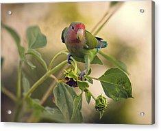 Lovebird On  Sunflower Branch  Acrylic Print by Saija  Lehtonen