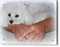 Loved Acrylic Print by Mary Beth Landis