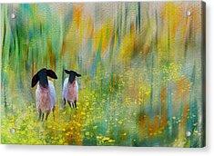 Lovely Day Sheep Acrylic Print